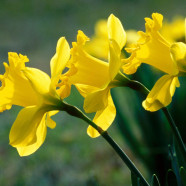 Mothering Sunday – 22 March