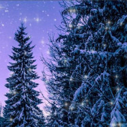 LUMEN CHAMBER CHOIR: A FESTIVAL OF CHRISTMAS, Wednesday 12 December, 7pm